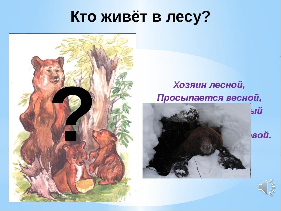 Хозяин лесной, Просыпается весной, А зимой под вьюжный вой Спит в берлоге сн...