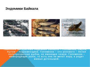 Эндемики Байкала Голомянка Омуль Бычки Наиболее интересные эндемики Байкала –
