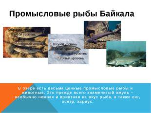 Промысловые рыбы Байкала Омуль Сиг Осётр Хариус В озере есть весьма ценные пр