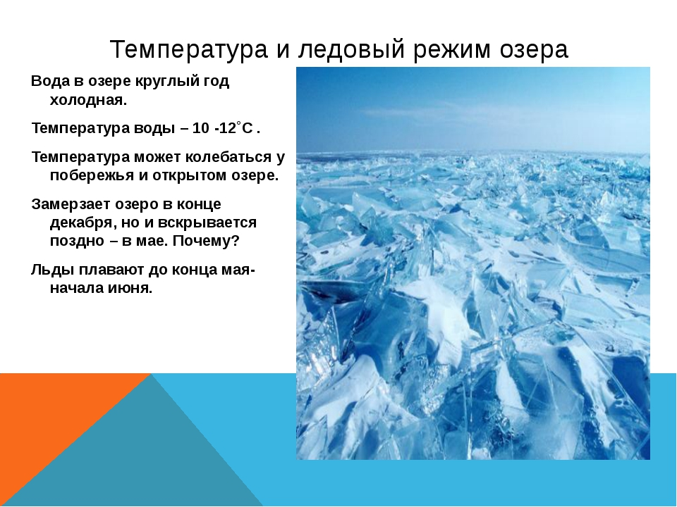 Вода в озере круглый год холодная. Температура воды – 10 -12˚С . Температура...