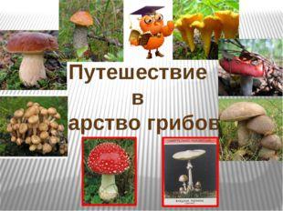 Путешествие в царство грибов.