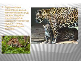 Ягуар – хищник семейства кошачьих, принадлежащий к роду пантера. Индейцы пле