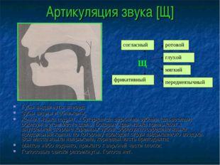 Артикуляция звука [Щ] Губы выдвинуты вперед; Зубы видны и сближены; Кончик яз