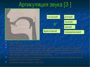 Артикуляция звука [З′] Губы в улыбке; Резцы обнажены, разомкнуты на 1-2 мм; К