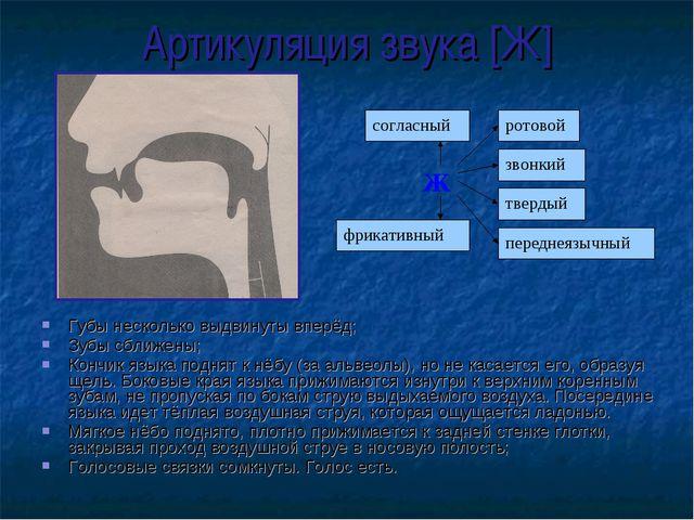 Артикуляция звука [Ж] Губы несколько выдвинуты вперёд; Зубы сближены; Кончик...