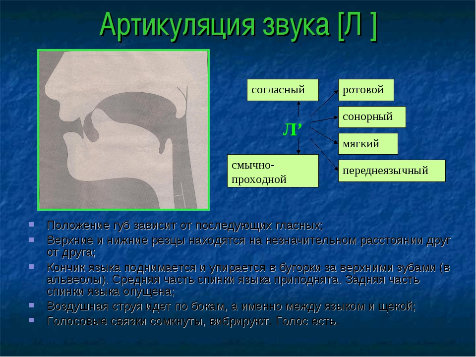 Артикуляция звука [Л′] Положение губ зависит от последующих гласных; Верхние...