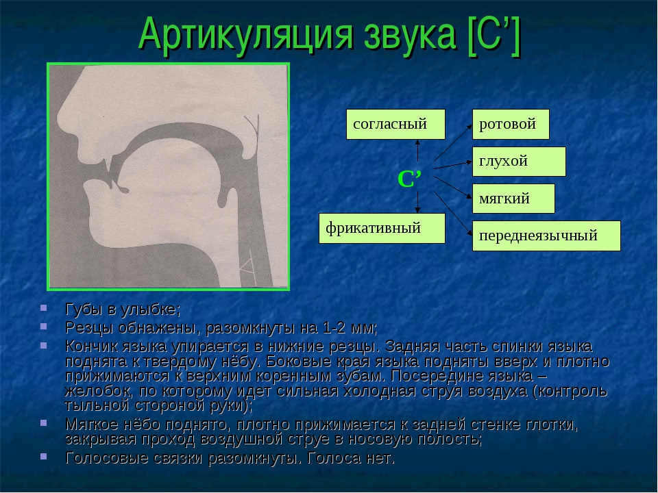 Артикуляция звука [С'] Губы в улыбке; Резцы обнажены, разомкнуты на 1-2 мм; К...