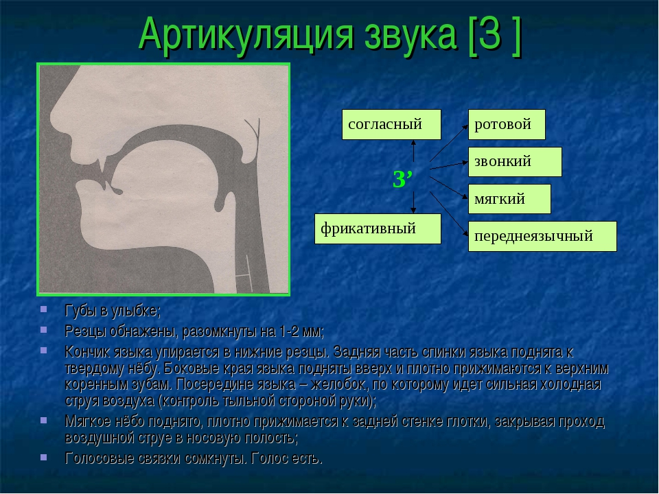 Артикуляция звука [З′] Губы в улыбке; Резцы обнажены, разомкнуты на 1-2 мм; К...
