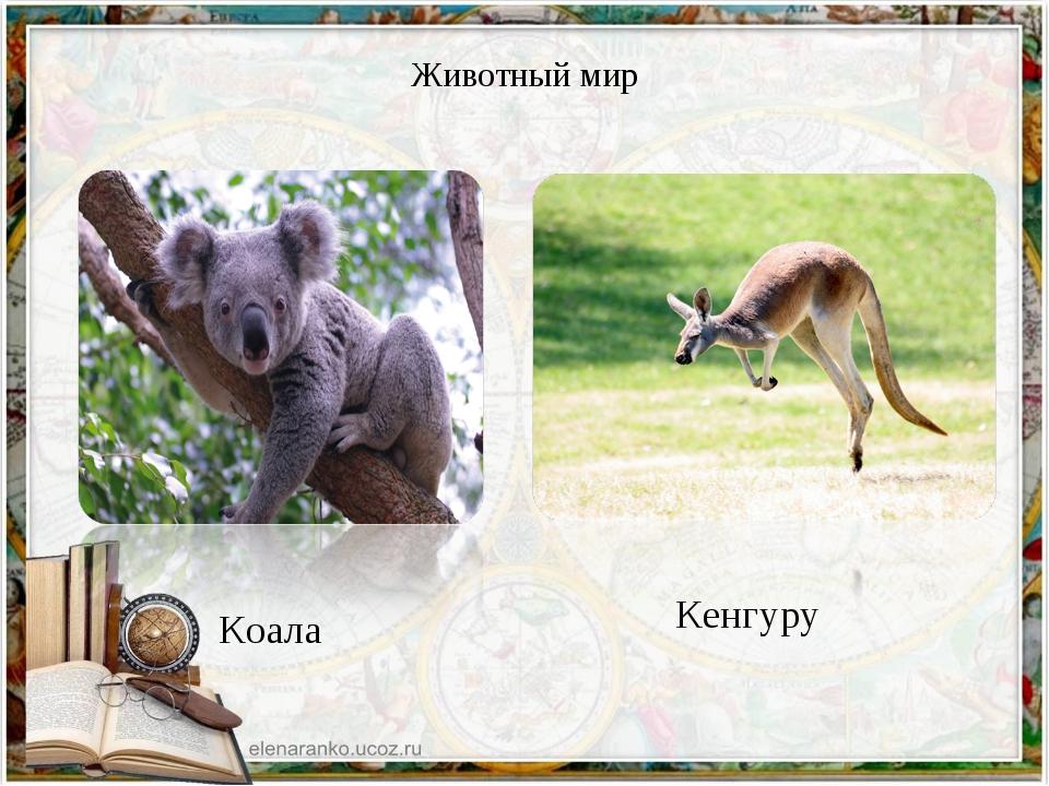 Животный мир Коала Кенгуру