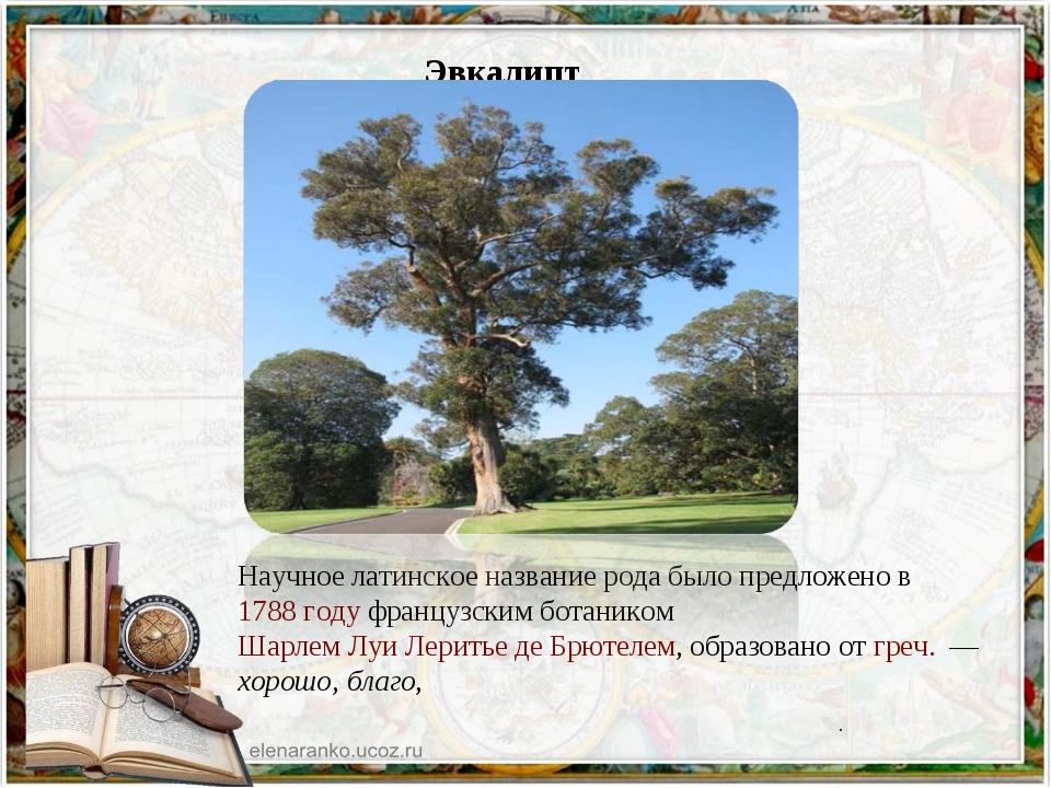 Эвкалипт Научное латинское название рода было предложено в 1788 году француз...