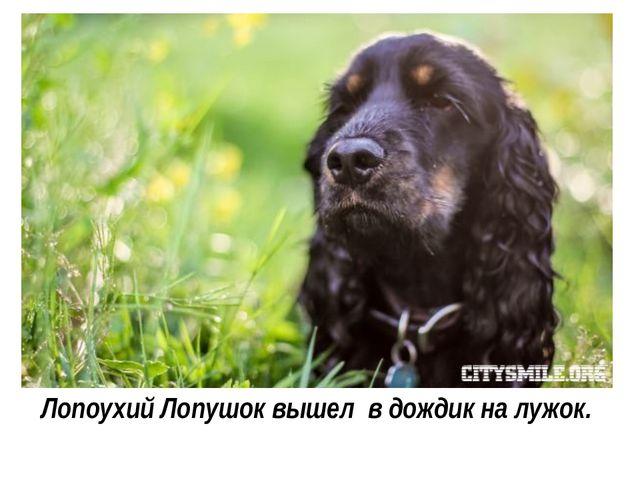 Лопоухий Лопушок вышел в дождик на лужок.