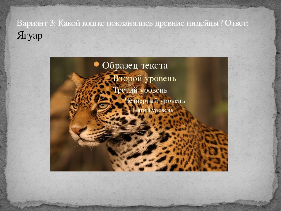 Вариант 3: Какой кошке покланялись древние индейцы? Ответ: Ягуар
