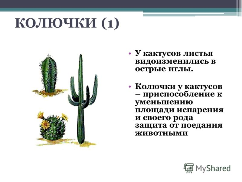 http://images.myshared.ru/405375/slide_3.jpg