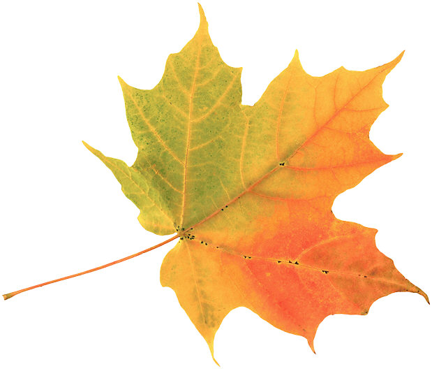 http://100-000-pochemu.info/wp-content/uploads/2010/04/Autumn-Leaf.jpg