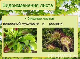 http://ppt4web.ru/images/8/7513/310/img27.jpg