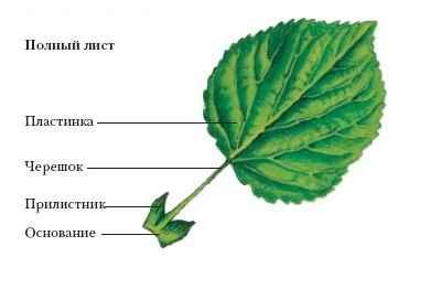 http://dic.academic.ru/pictures/dic_biology/l_033.jpg