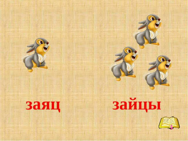 заяц зайцы
