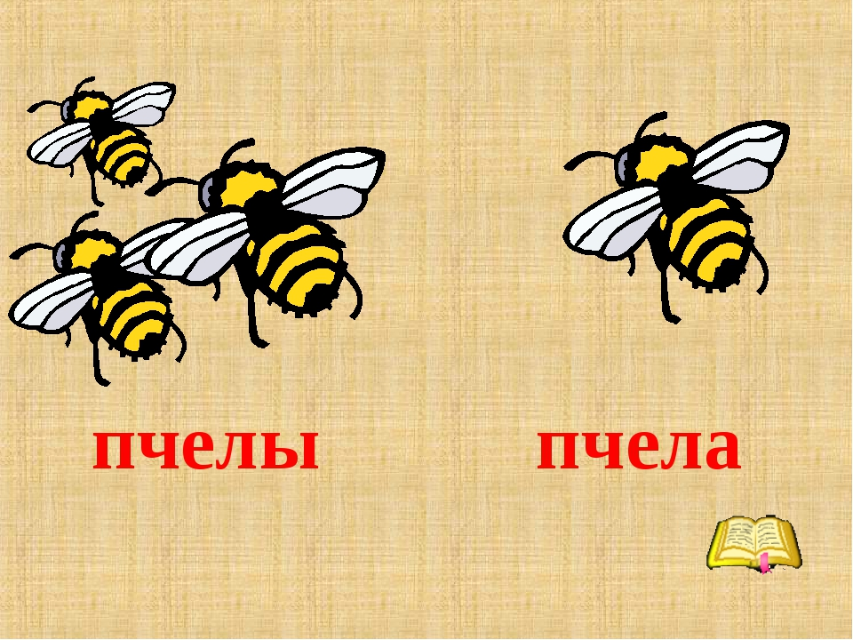 пчелы пчела