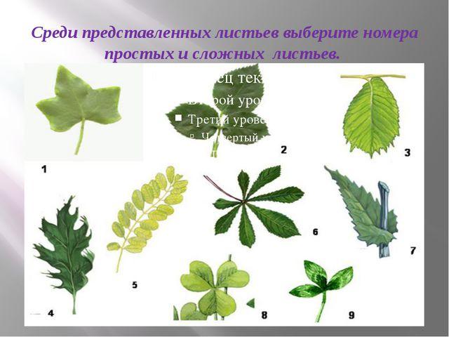 Среди представленных листьев выберите номера простых и сложных листьев.