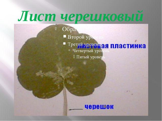 Лист черешковый