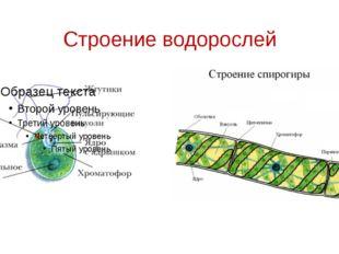 Строение водорослей