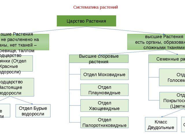 Систематика растений Царство Растения низшие Растения тело не расчленено на о...