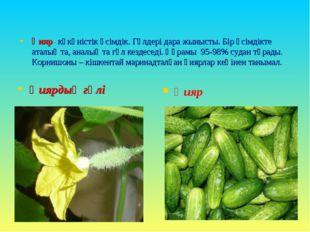 Қияр- көкөністік өсімдік. Гүлдері дара жынысты. Бір өсімдікте аталық та, анал
