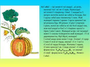 Асқабақ – ірі жемісті тағамдық, дәрілік, малазықтық және сәндік, біржылдық шө