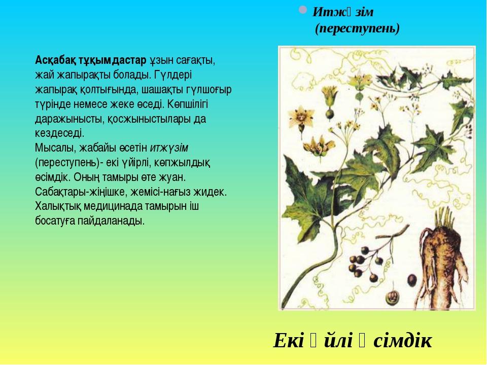Асқабақ тұқымдастар ұзын сағақты, жай жапырақты болады. Гүлдері жапырақ қолты...