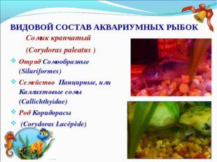 ВИДОВОЙ СОСТАВ АКВАРИУМНЫХ РЫБОК Сомик крапчатый (Corydoras paleatus ) Отряд