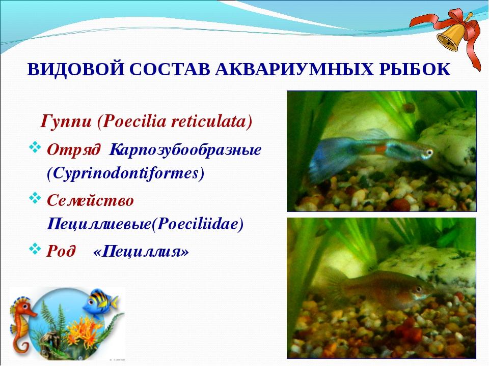 ВИДОВОЙ СОСТАВ АКВАРИУМНЫХ РЫБОК Гуппи (Poecilia reticulata) Отряд Карпозубоо...