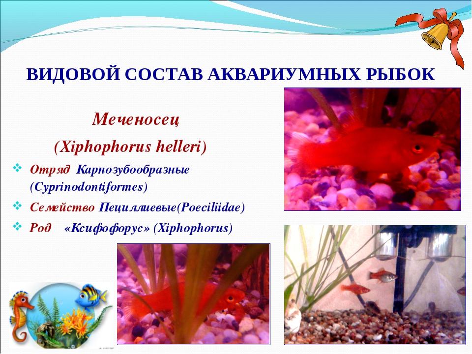 ВИДОВОЙ СОСТАВ АКВАРИУМНЫХ РЫБОК Меченосец (Xiphophorus helleri) Отряд Карпоз...