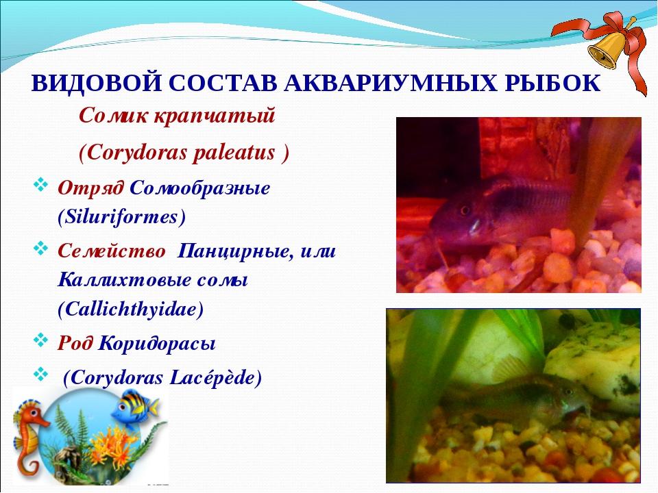 ВИДОВОЙ СОСТАВ АКВАРИУМНЫХ РЫБОК Сомик крапчатый (Corydoras paleatus ) Отряд...