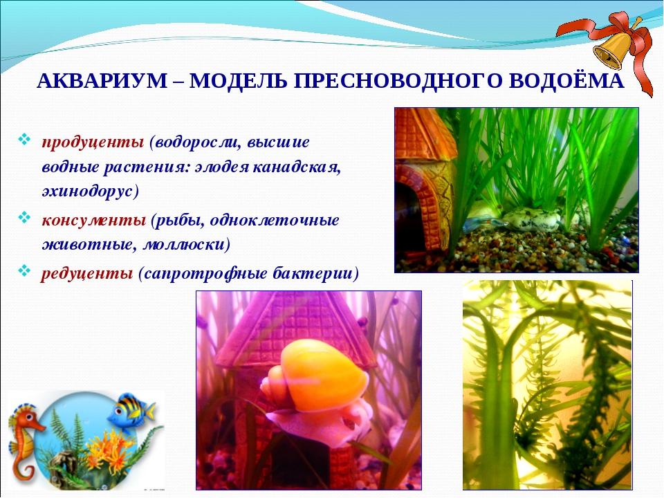 АКВАРИУМ – МОДЕЛЬ ПРЕСНОВОДНОГО ВОДОЁМА продуценты (водоросли, высшие водные...