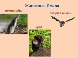 Животные Ямала землеройка крот летучая мышь