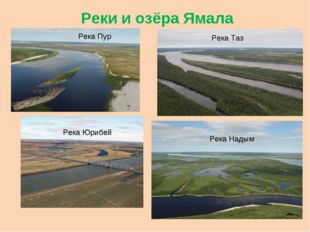 Реки и озёра Ямала Река Пур Река Таз Река Юрибей Река Надым