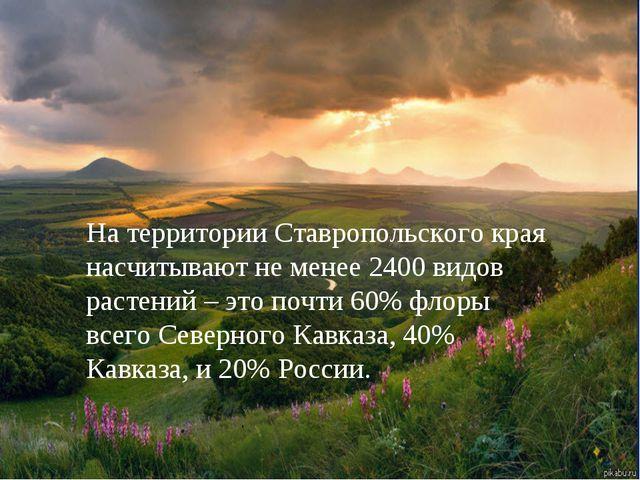 На территории Ставропольского края насчитывают не менее 2400 видов растений –...