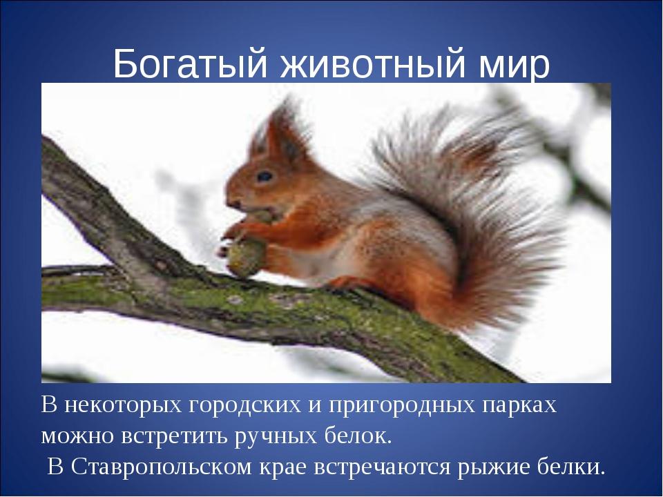 Богатый животный мир В некоторых городских и пригородных парках можно встрети...
