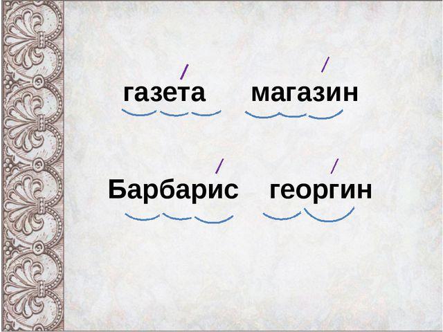 газета магазин Барбарис георгин
