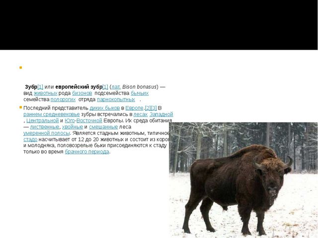 Зубр[1] или европейский зубр[1] (лат.Bison bonasus)— вид животных рода биз...