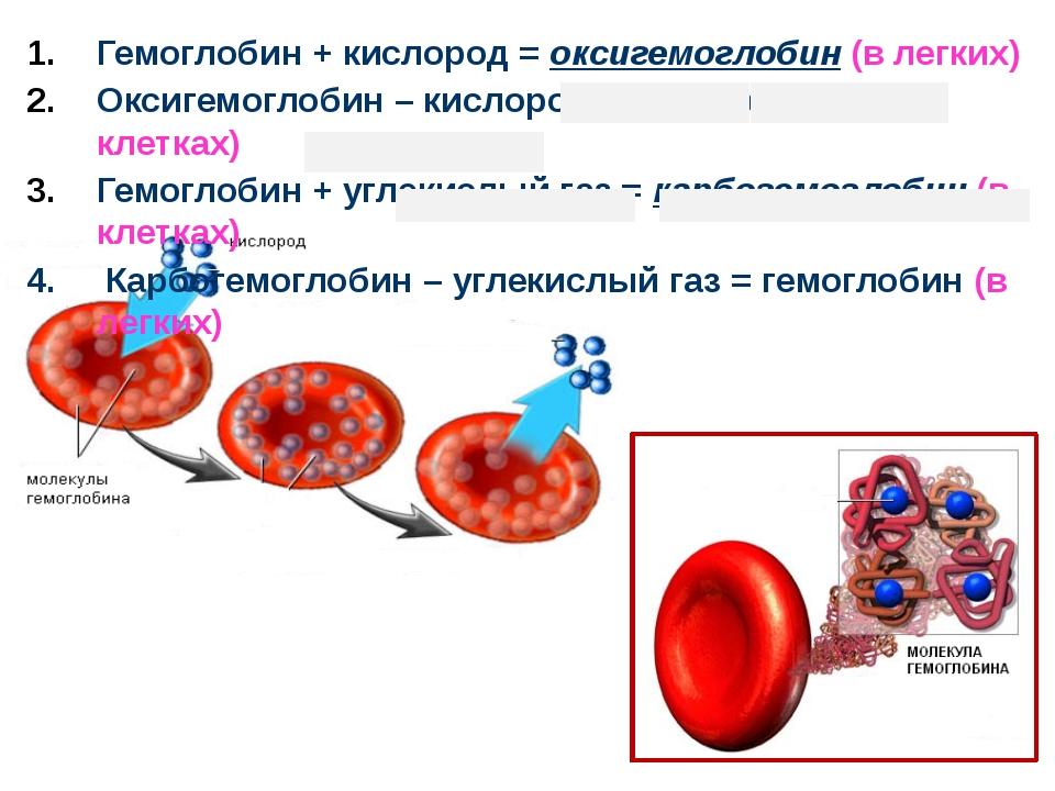 Гемоглобин + кислород = оксигемоглобин (в легких) Оксигемоглобин – кислород =...