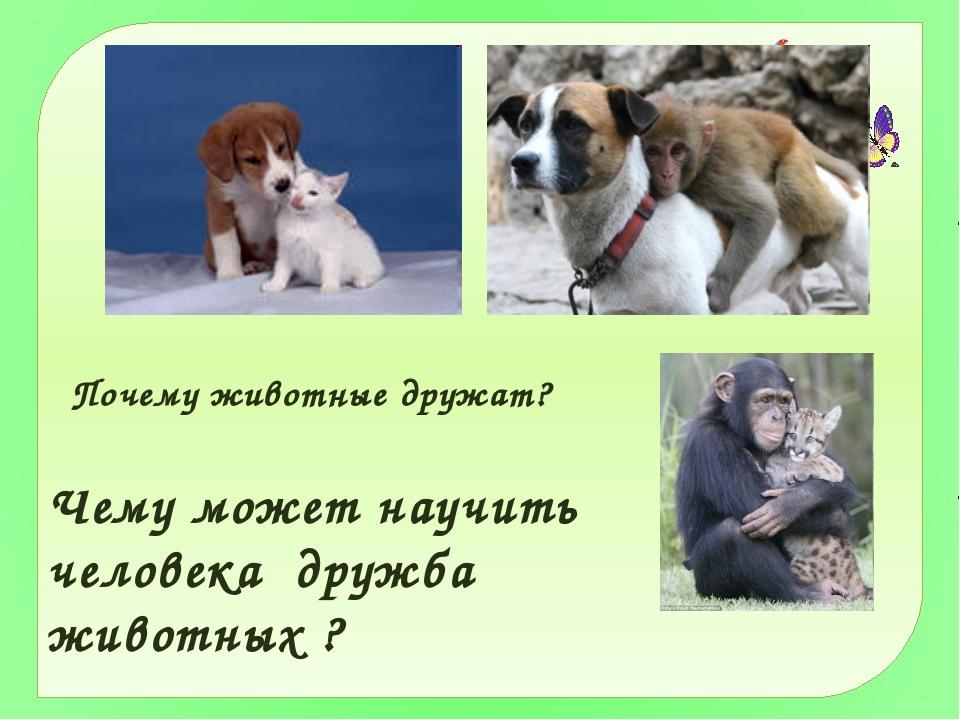 какие примеры дружбы человека с животными