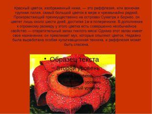 Красный цветок, изображенный ниже, — это раффлезия, или вонючая трупная лилия