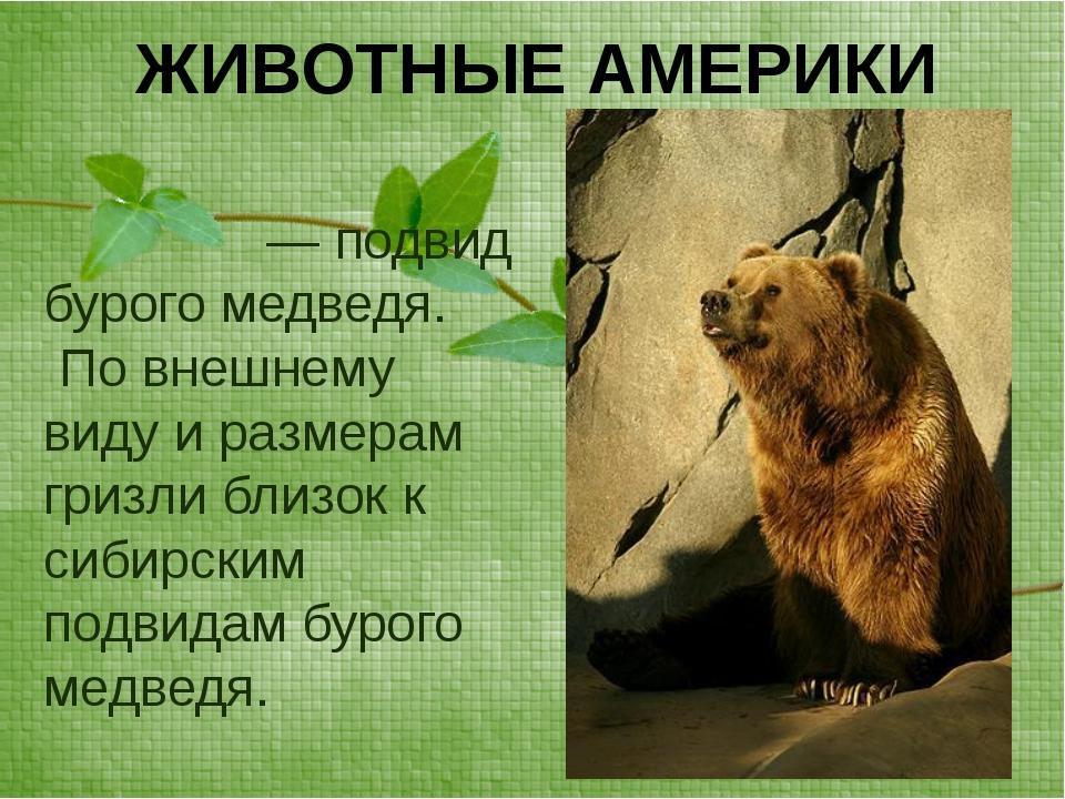 ЖИВОТНЫЕ АМЕРИКИ Гри́зли— подвид бурого медведя. По внешнему виду и размерам...
