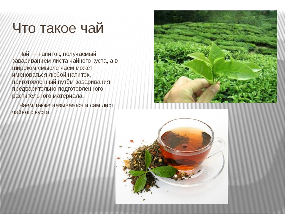 Что такое чай Чай — напиток, получаемый завариванием листа чайного куста, а...
