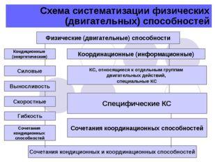 Схема систематизации физических (двигательных) способностей Физические (двига