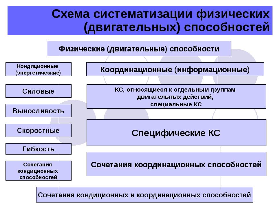 Схема систематизации физических (двигательных) способностей Физические (двига...