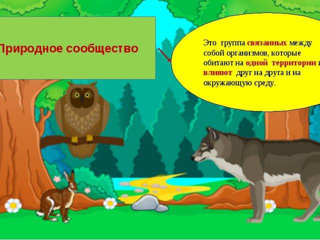 Природное сообщество Это группа связанных между собой организмов, которые оби...