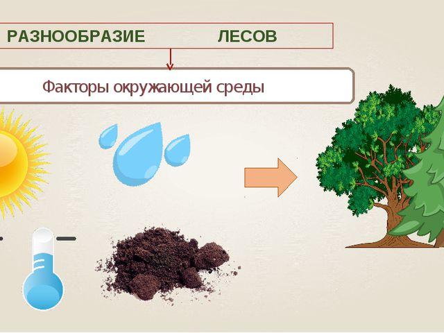 Факторы окружающей среды РАЗНООБРАЗИЕ ЛЕСОВ