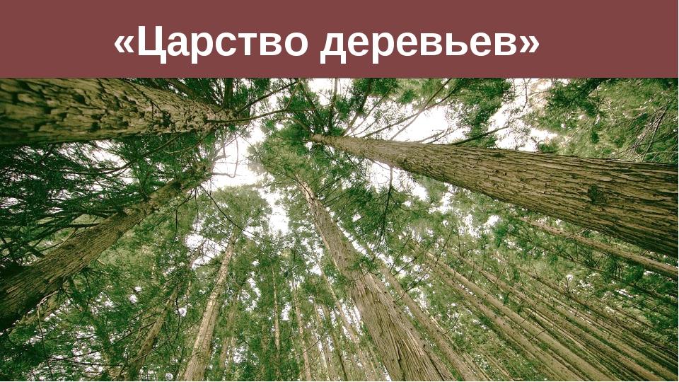 «Царство деревьев»